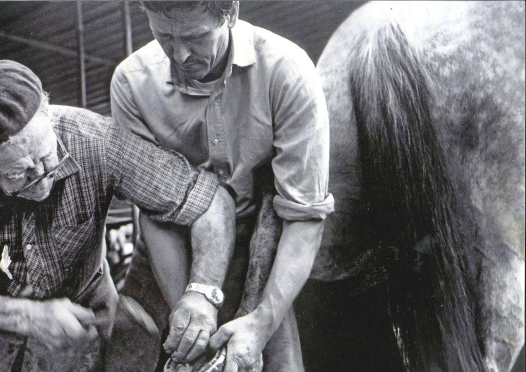 Foto Archivio Cavallo